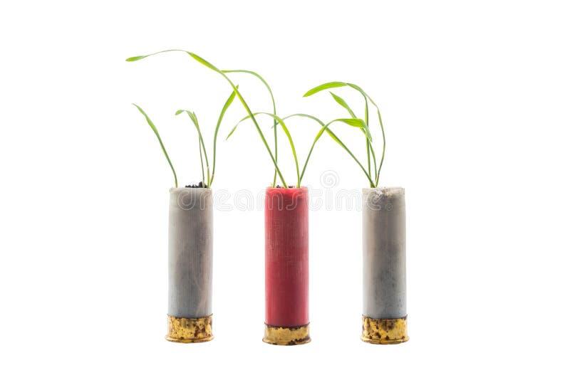 Aucune photo de concept de guerre Les pousses de l'herbe se développe hors de la cartouche d'arme à feu photo stock