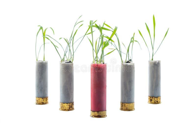 Aucune photo de concept de guerre Les pousses de l'herbe se développe hors de la cartouche d'arme à feu image libre de droits