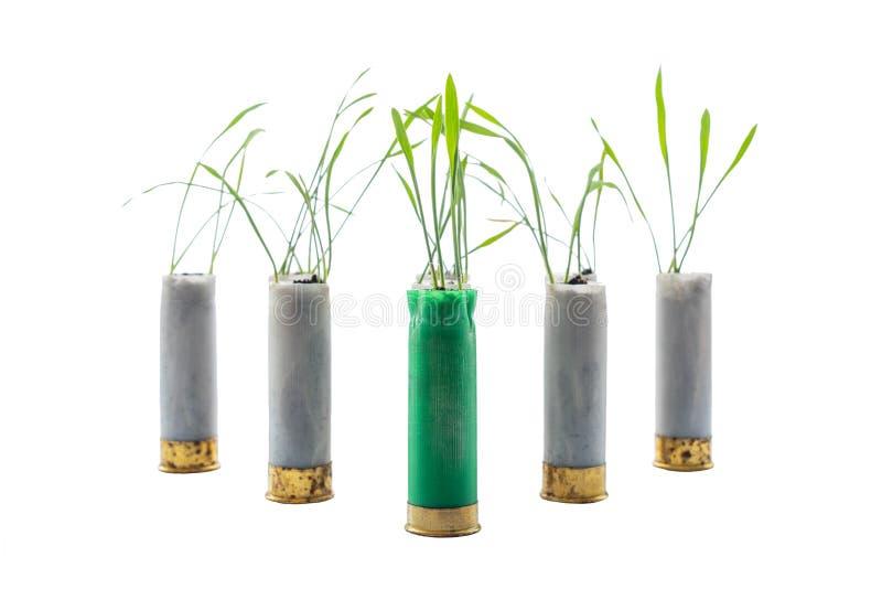 Aucune photo de concept de guerre Les pousses de l'herbe se développe hors de la cartouche d'arme à feu photographie stock libre de droits