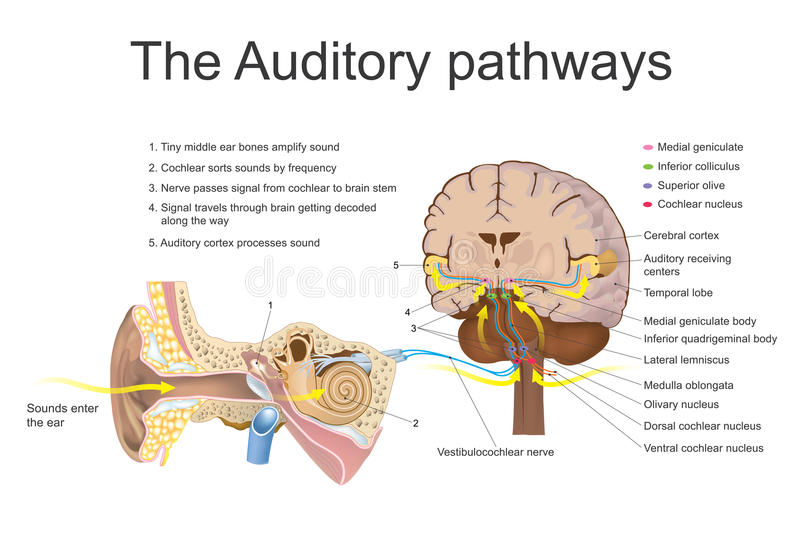 Auditory droga przemian ilustracji