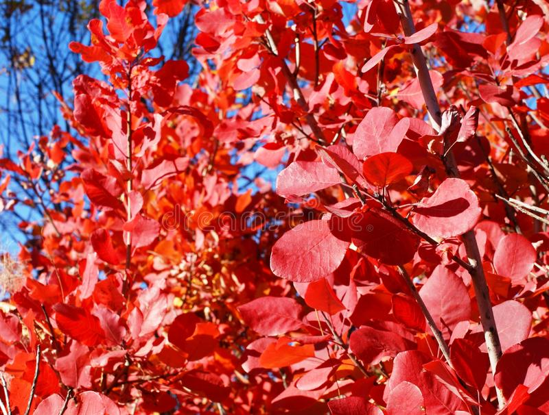 Auf Abschied malte ein schöner Busch ein Laub in einer hellen Farbe lizenzfreie stockbilder