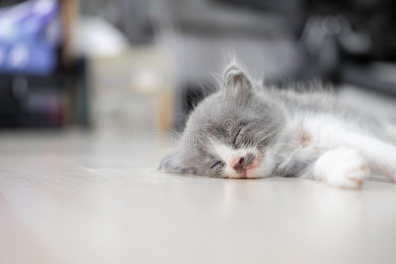 Auf dem Boden schläft ein Kätzchen mit grauem und weißem Fell lizenzfreies stockfoto