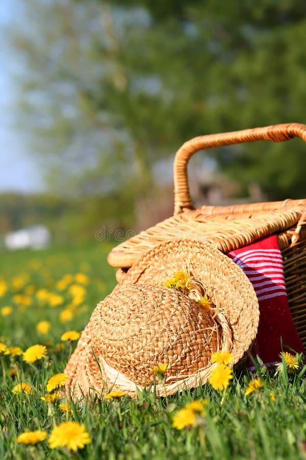 Auf dem Gras stockbilder
