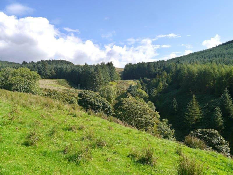 Auf dem Hügel, der zu beladenem Tal der schweren Flora schaut stockfoto