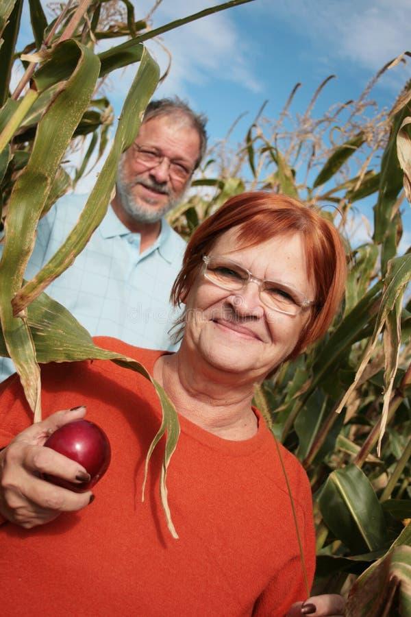 Auf dem Maisgebiet lizenzfreie stockfotografie