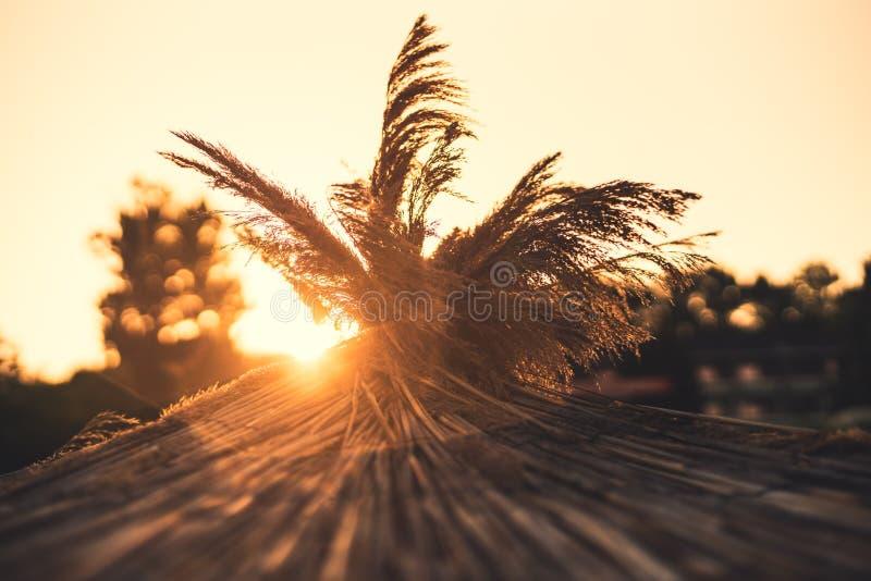 Auf dem Strandfeiertagskonzept tageslicht Landschaft mit Pfau lizenzfreie stockfotografie
