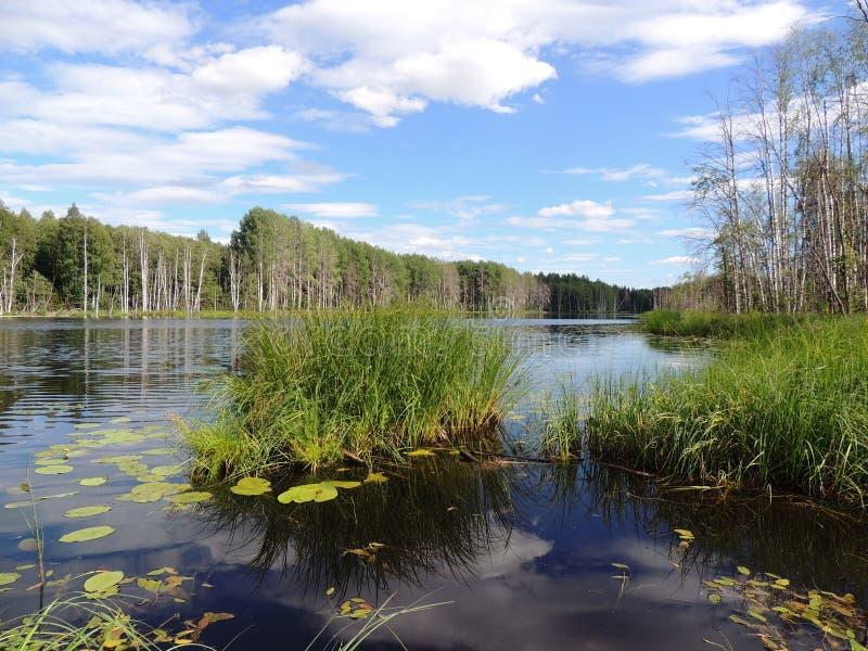 Auf dem Ufer von schönem See stockbild