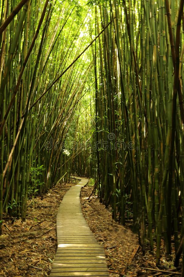 Auf dem Weg durch den Bambuswald im Haleakal-Nationalpark lizenzfreie stockfotos