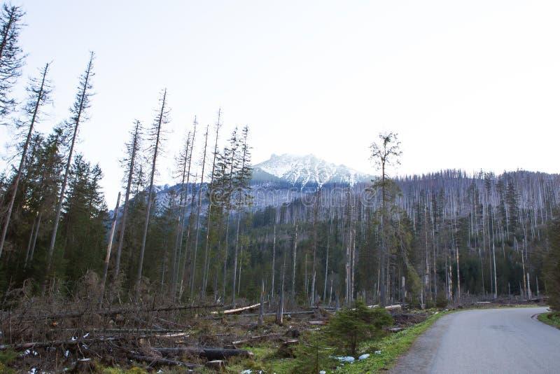 Auf dem Weg zum Seeauge in Polen Die Straße zum Wald Tatras slowakei stockbild
