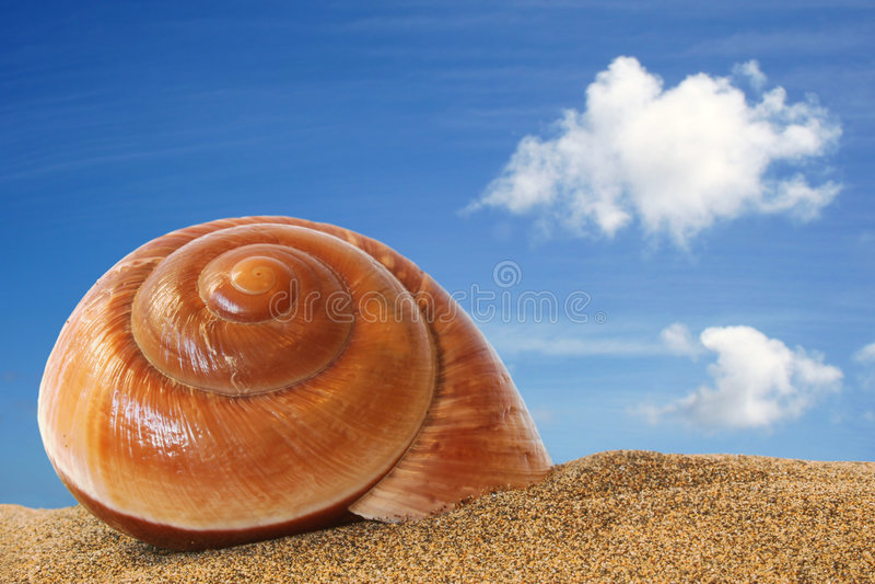 Auf den Strand gesetzter Seashell stockfoto