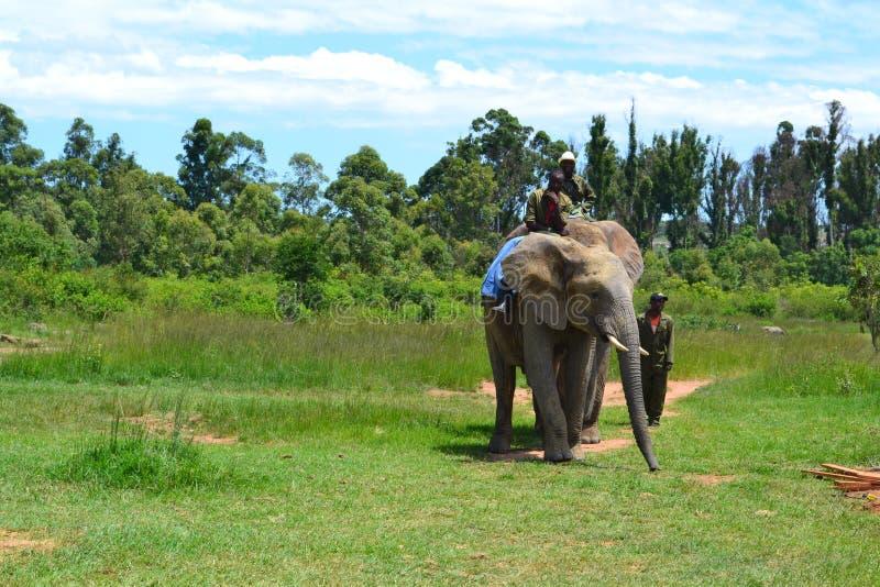 Auf der Safari in Simbabwe lizenzfreies stockbild
