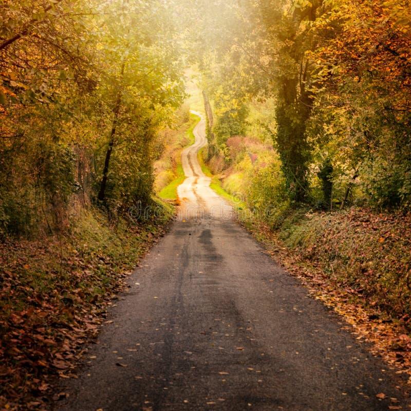 Auf der Straße im Herbst stockfotografie