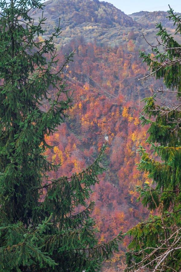 Auf die Baumspitze stockbild