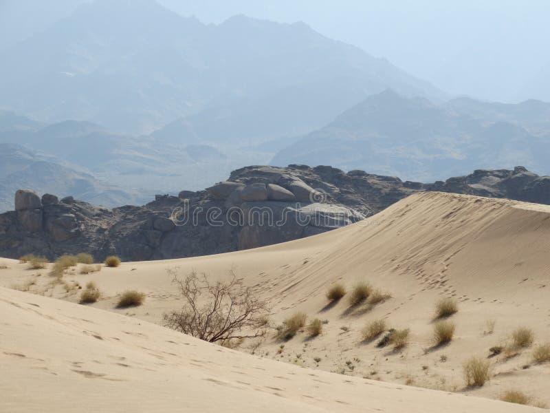 Auf die Sanddüne lizenzfreie stockfotos
