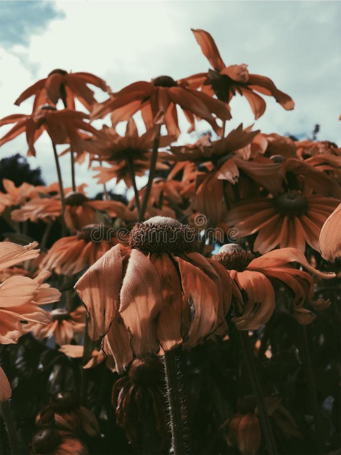 Auf einem Gebiet von Blumen lizenzfreies stockbild