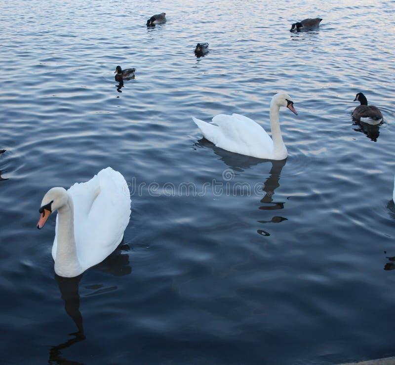 Auf einem See morgens lizenzfreie stockfotos