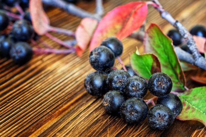 Auf einer Holztheke auf einer Bauernmesse befindet sich ein Zweig der Chokebeere mit Blättern und Beerenhaufen Neue Ernte Nahaufn stockfoto