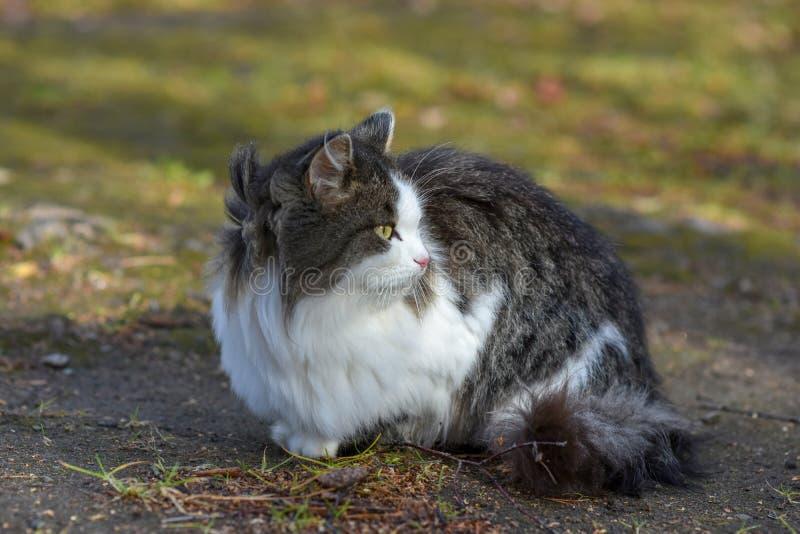 Auf Erde hat Katze Nahrung und schaut vorwärts zu stockfotos