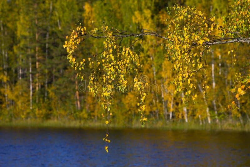 Auf Herbstsee lizenzfreies stockfoto