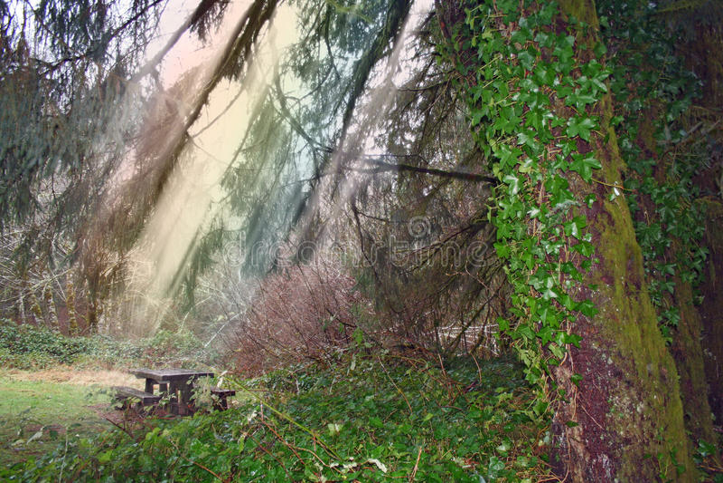 Auf lagerbild des Waldes nach Regen stockfotos