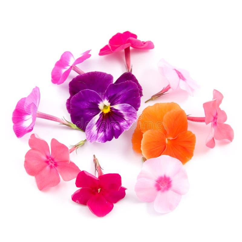 Aufbau der Blumen stockfoto