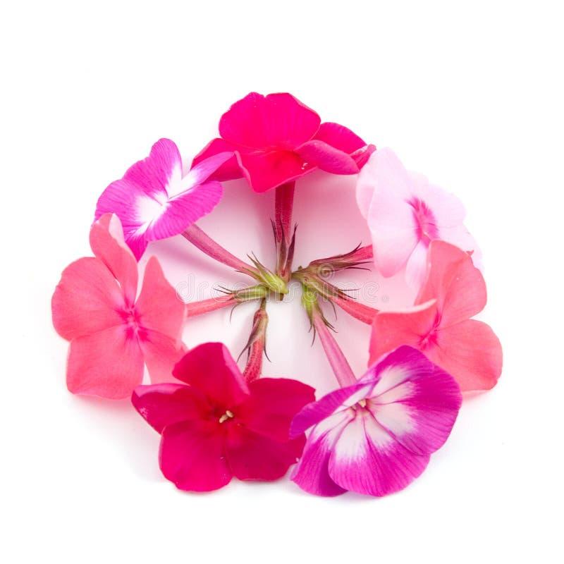 Aufbau der Blumen stockfotos