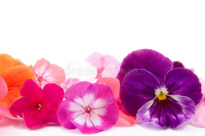 Aufbau der Blumen lizenzfreie stockfotos