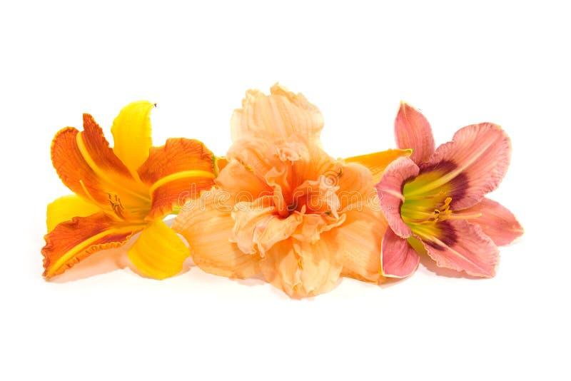 Aufbau von den Lilien lizenzfreie stockbilder