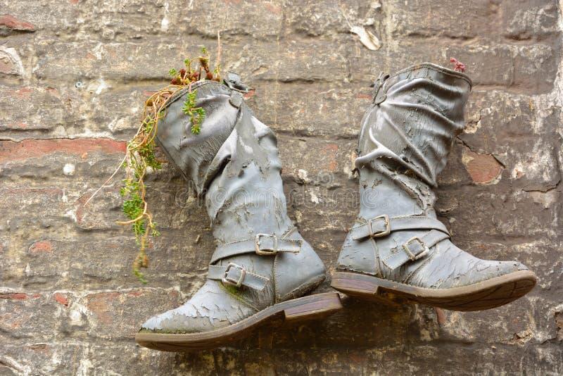 Aufbereitete Stiefel benutzt als Pflanzer stockfotos