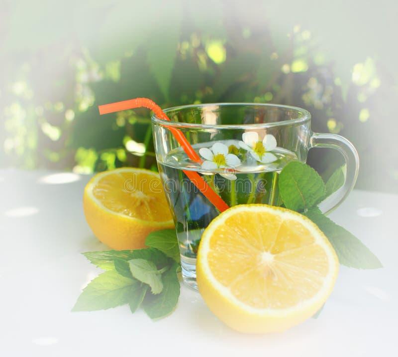 Auffrischungsselbst gemachtes Cocktail des sommers mit Zitrone, vor dem hintergrund der grünen Blätter der Gartenbäume stockfotos