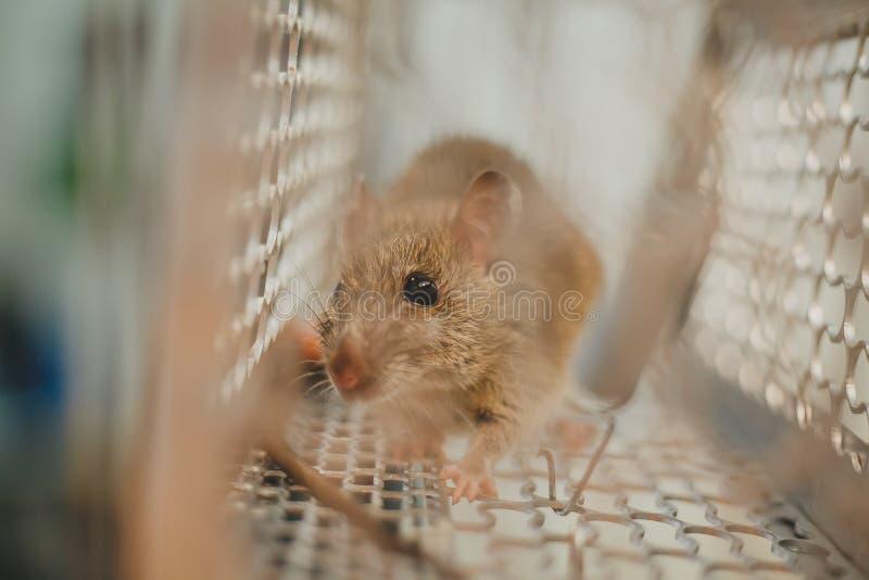 Aufgefangene Maus stockbild