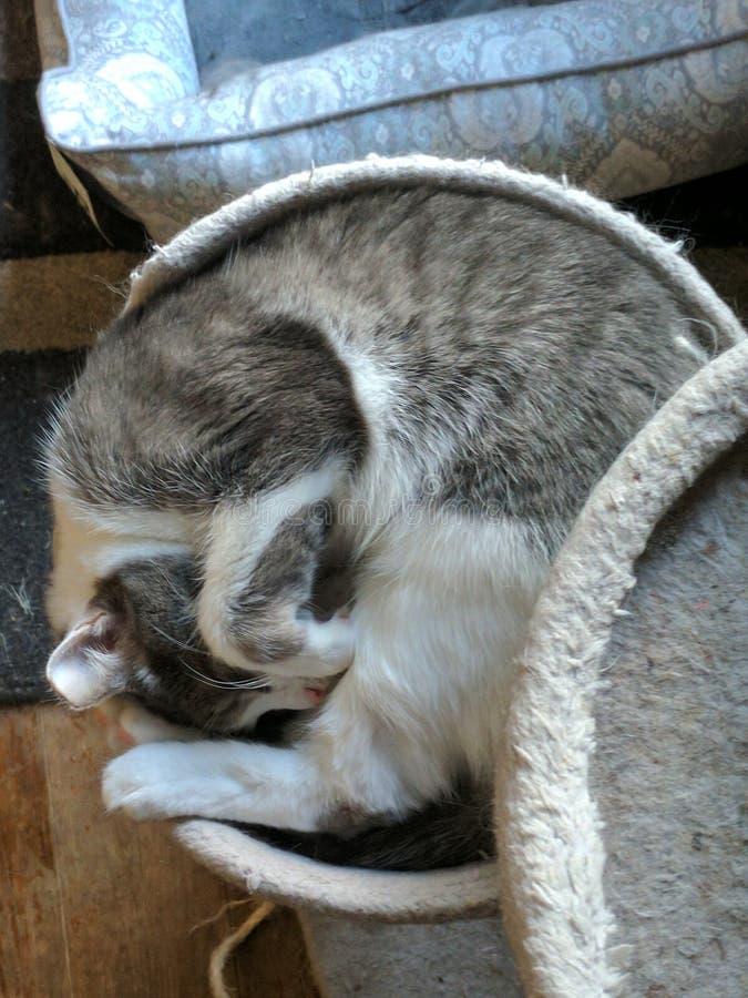 Aufgerollte Katze stockfoto