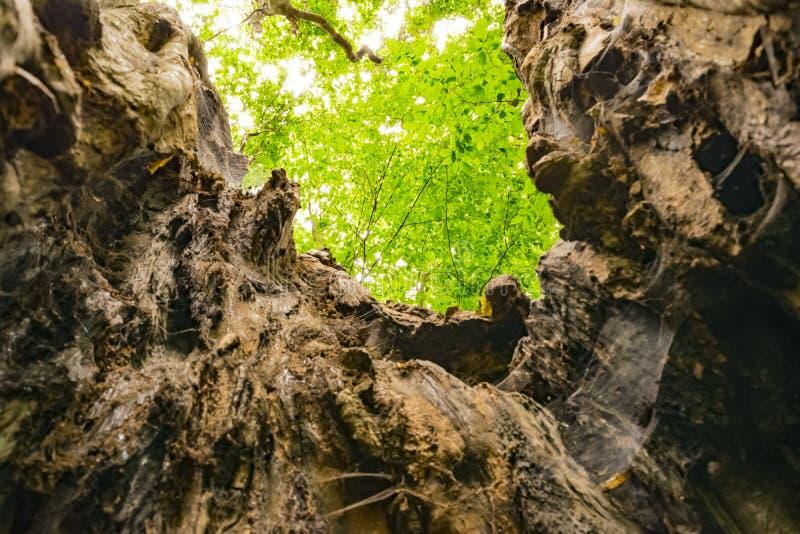 Aufgeteilter Baum lizenzfreie stockfotos