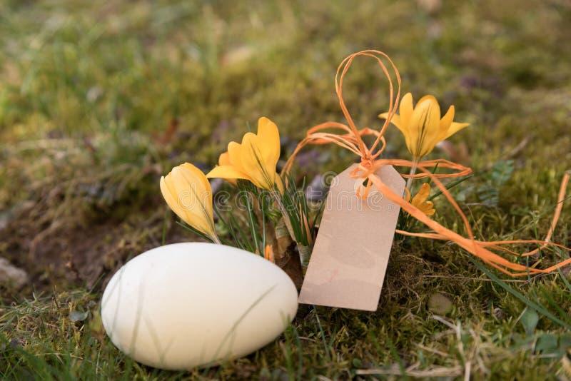 Aufkleber mit einem Osterei und gelben Krokussen stockfoto