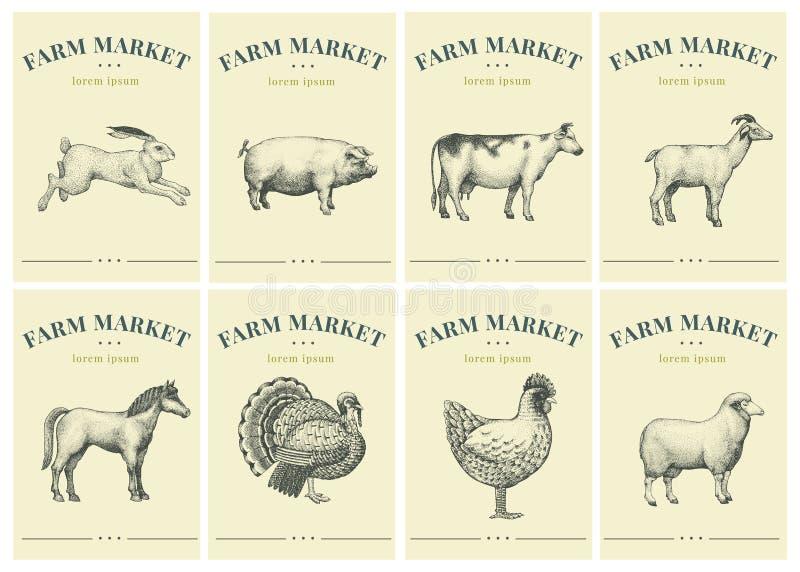 Aufkleber mit Vieh Stellen Sie Schablonen-Preise für Shops und Märkte des biologischen Lebensmittels ein Retro- Illustrationskuns stockbild