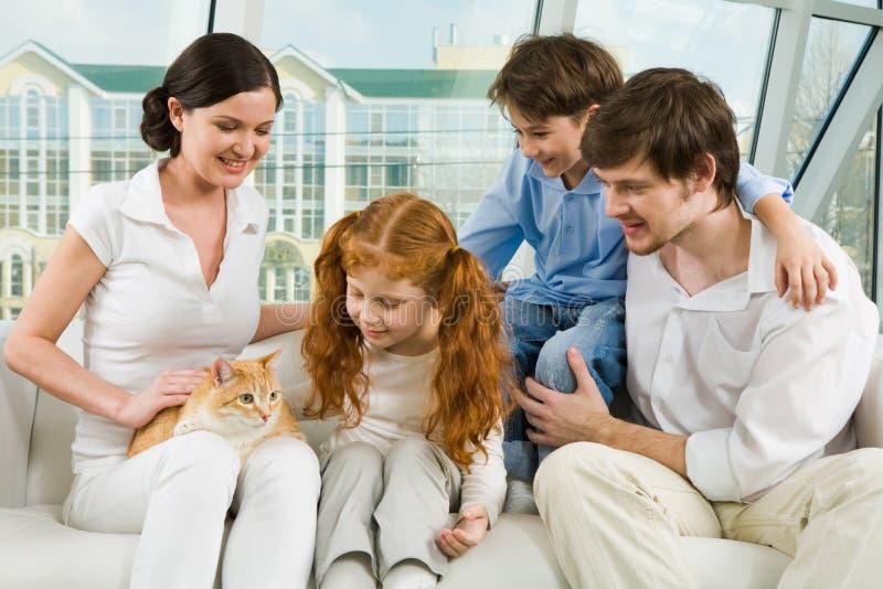 Aufmerksamkeit zur Katze stockbilder