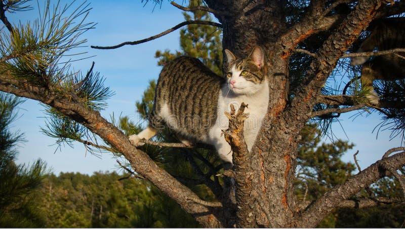 Aufpassen der Welt von einem Baum stockbilder