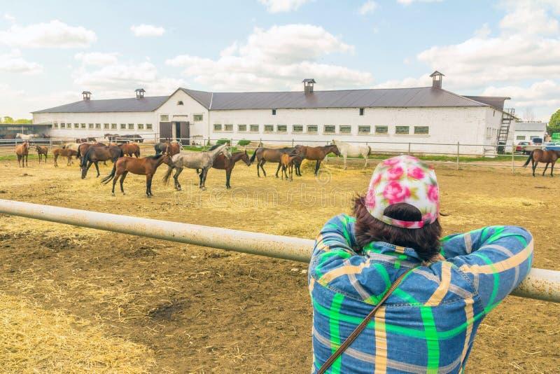 Aufpassende Pferde der Frau auf einem Pferdebauernhof stockfotografie