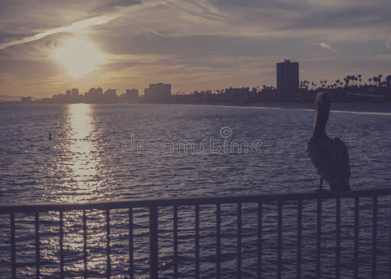 Aufpassender Sonnenuntergang des Pelikans lizenzfreie stockbilder