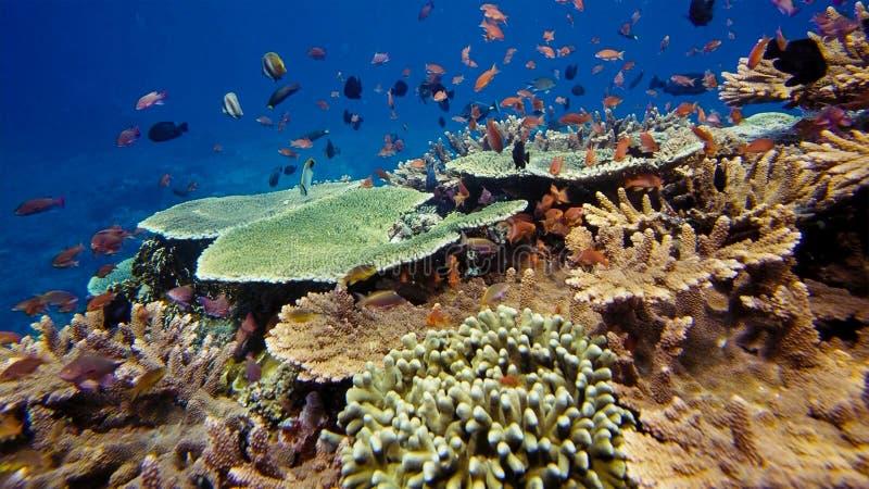 Aufstand des Unterwasserlebens Vielfalt der Form, fabelhafte Farben von weichen Korallen und bunte Schule von Fischen Papua Niugi stockfotos