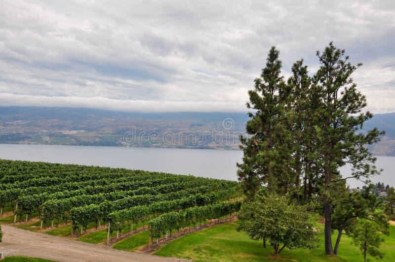 Auftrag-Hügel, Britisch-Columbia, Kanada stockbilder
