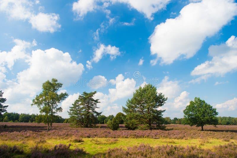 Auftrieb gegeben durch übernehmende Landschaft des Klimawandelneophyten Naturlandschaft mit blauem Himmel der Bäume und purpurrot lizenzfreie stockfotos