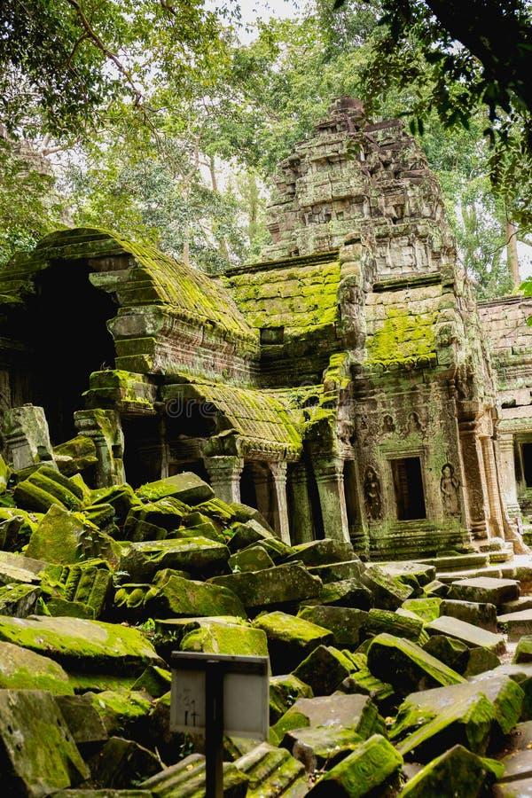 Aug: 28: 2018 - SIEM PRZEPROWADZAJĄ ŻNIWA, KAMBODŻA - Ta Prohm świątynia w Angkor Thom zdjęcie royalty free