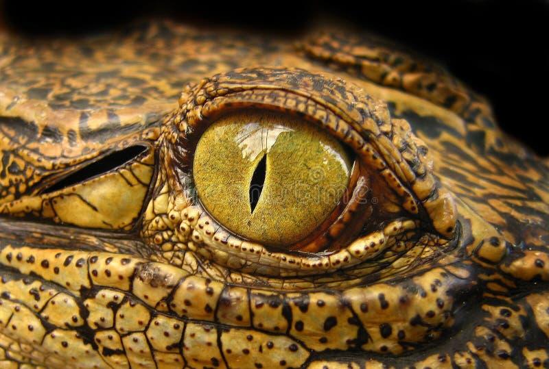 Auge des Drachen stockfotos