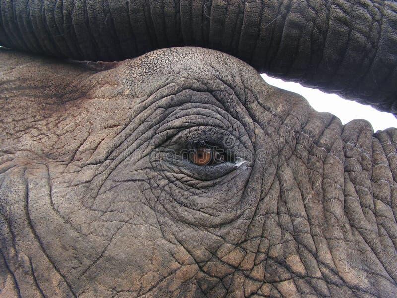 Auge des Elefanten lizenzfreie stockbilder
