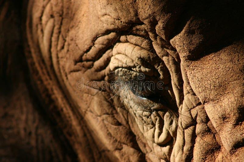 Auge des Elefanten lizenzfreies stockfoto