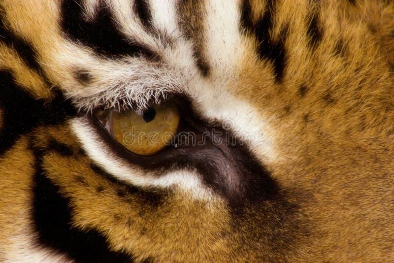 Auge des Tigers lizenzfreie stockbilder
