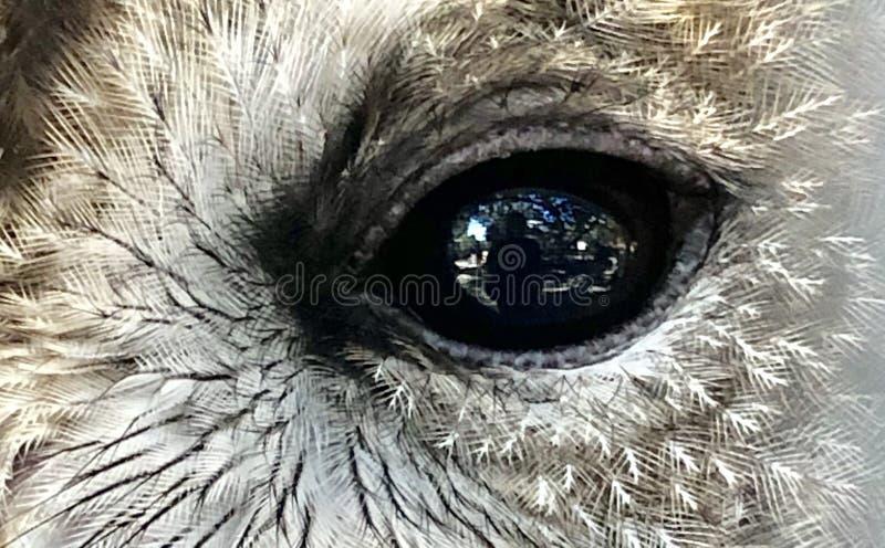 Auge einer Eule lizenzfreie stockfotos