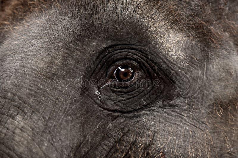 Auge eines asiatischen Elefanten lizenzfreie stockbilder
