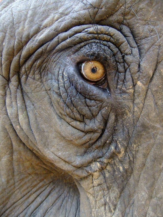 Auge eines Elefanten stockfotos